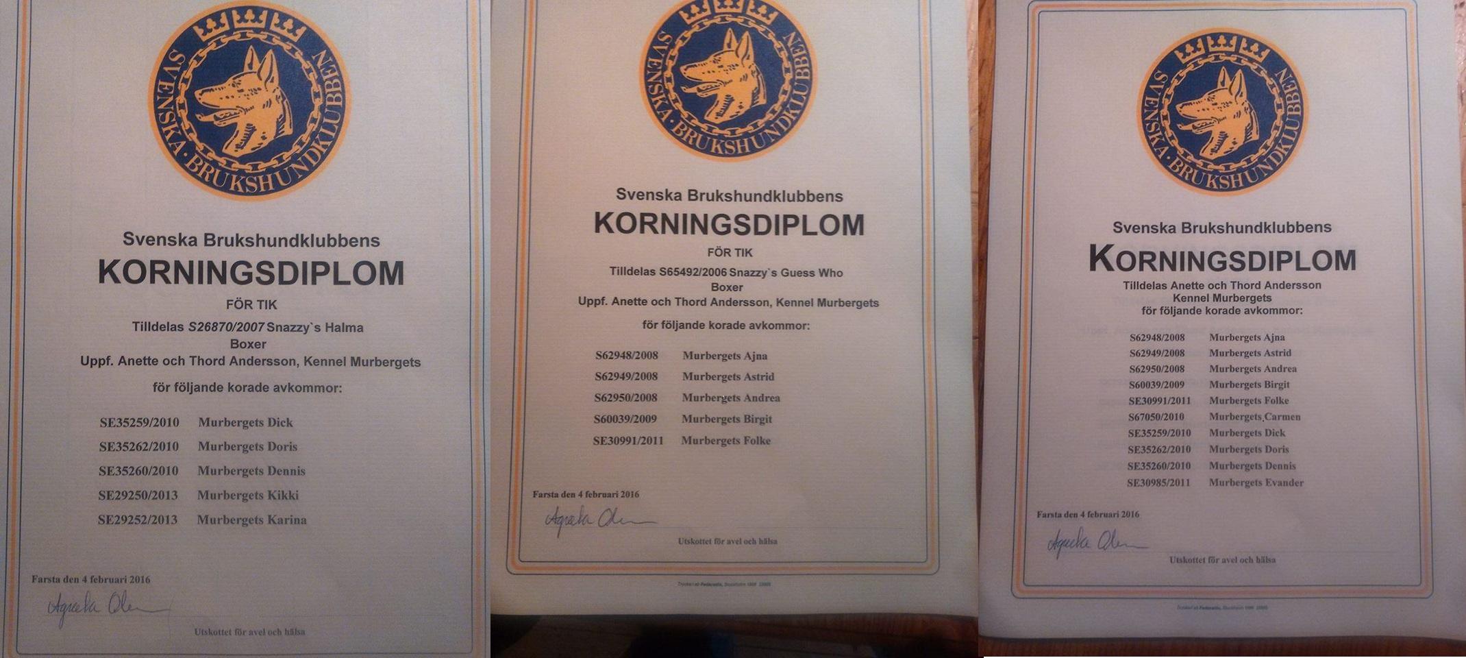 12714233_1024969800925105_1995259867_n.jpg diplom