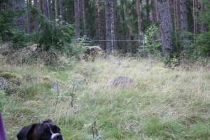 Rut och Björn 001 - Kopia - Kopia (2) - Kopia.JPG-for-web-large