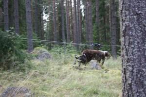 Rut och Björn 005.JPG-for-web-large