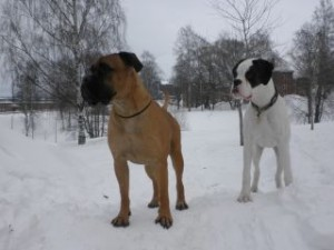 boel och dogge 2.JPG-for-web-normal