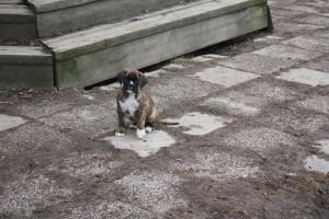 ekullen bulldog 25-4-14 035