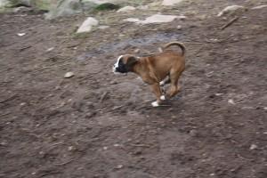 ekullen bulldog 25-4-14 058