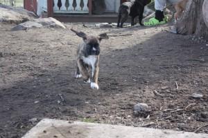 ekullen bulldog 25-4-14 066